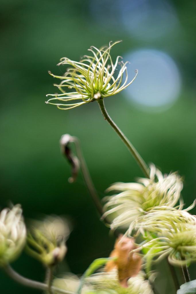 Rostliny 0004