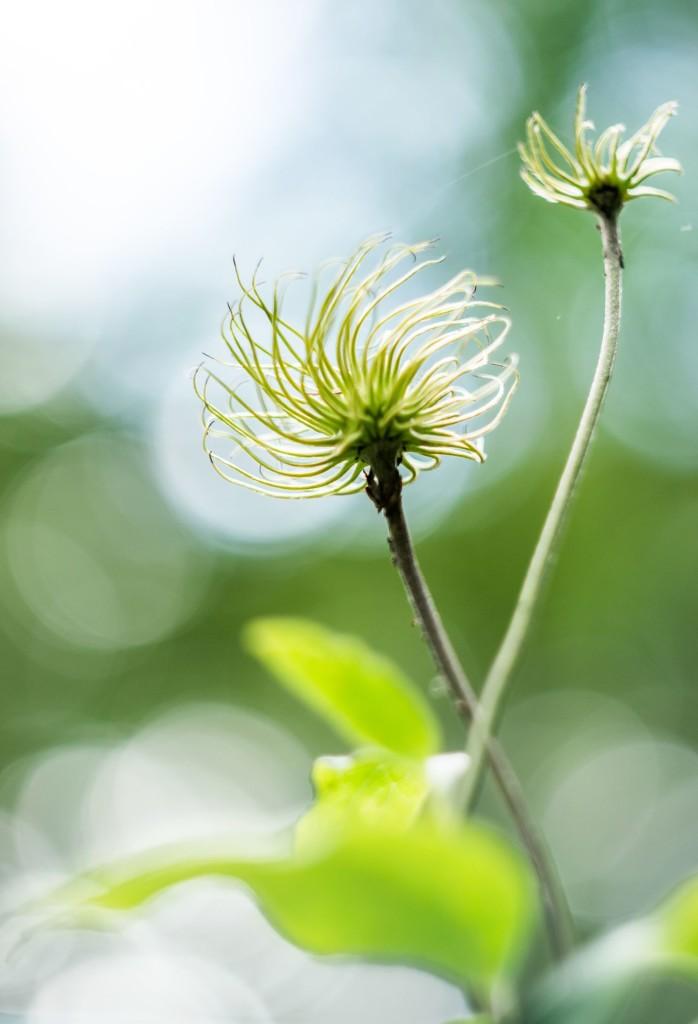 Rostliny 0005
