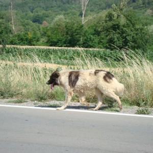 Stopem Srbsko Bulharsko 3SB0032