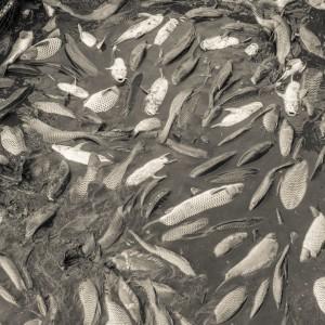 Výlov rybníka Drahotín 0035